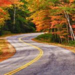 a beautiful road in the forest during fall.